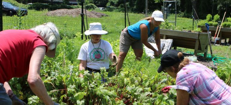 Culinary Wellness Garden: Our 'Farm to Fork' Update